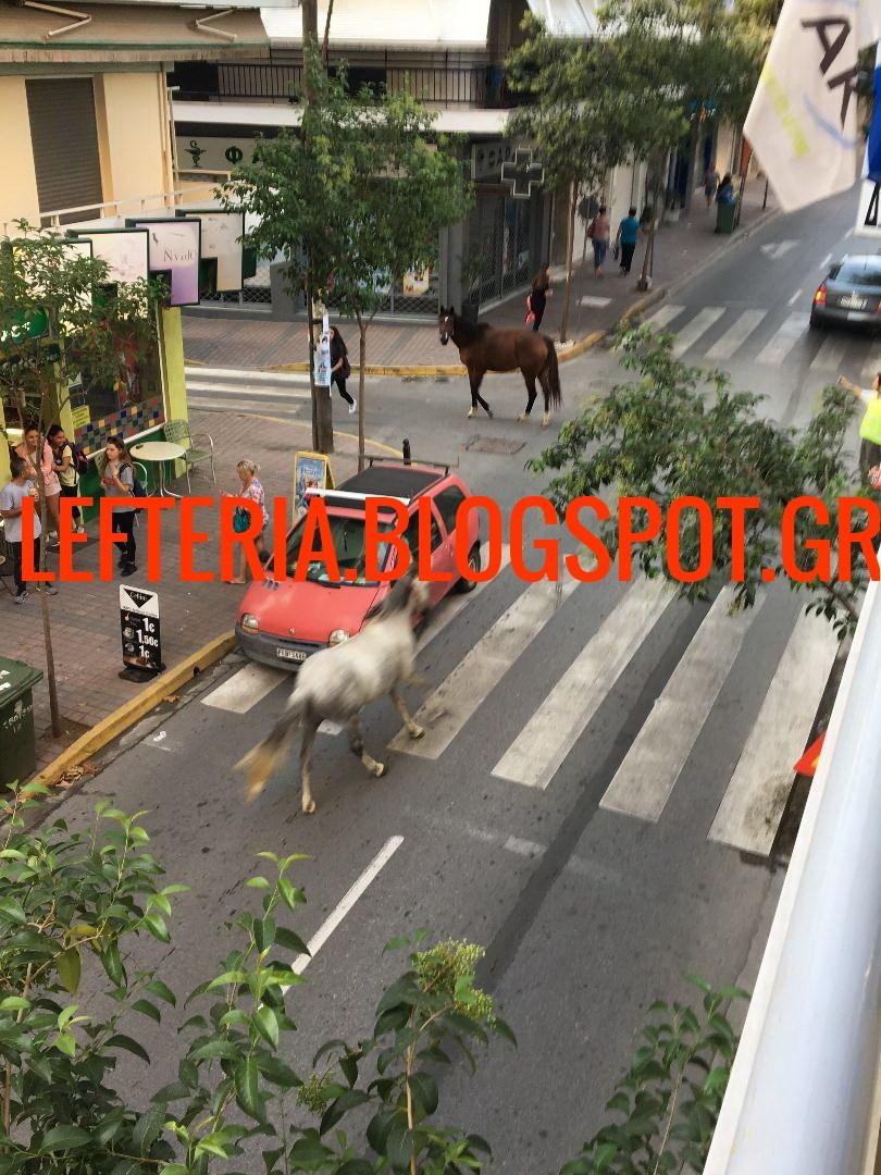 Κατερινη αλογα (3)