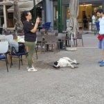 Δηλητηρίασαν σκύλους στο κέντρο των Τρικάλων (ΦΩΤΟ)