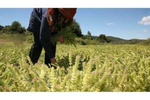 Χρηματικό βοήθημα σε 1.300 πολύτεκνες αγρότισσες μητέρες