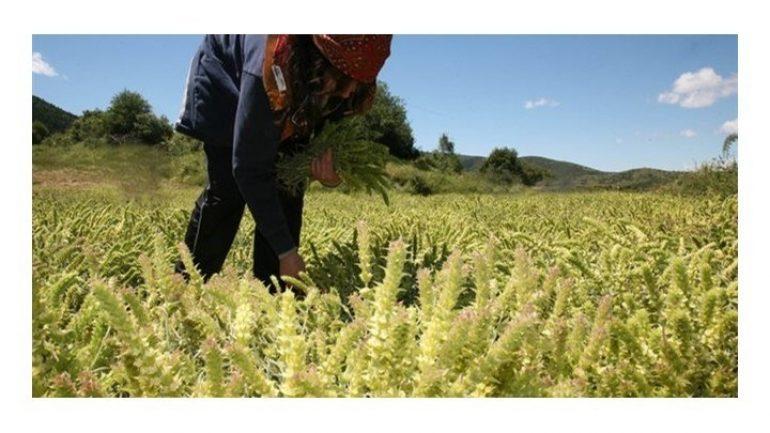 Μέχρι και 1.500 ευρώ χρηματικό βοήθημα θα δώσει ο ΟΓΑ σε 1.300 πολύτεκνες αγρότισσες μητέρες