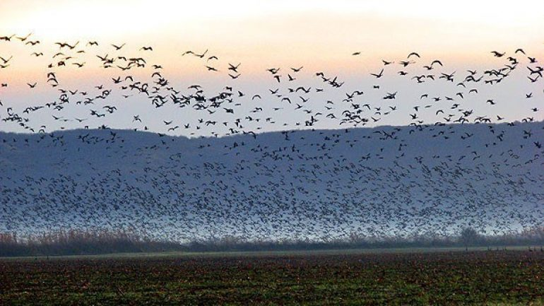 25 εκατομμύρια πουλιά θανατώνονται παράνομα στη Μεσόγειο κάθε χρόνο