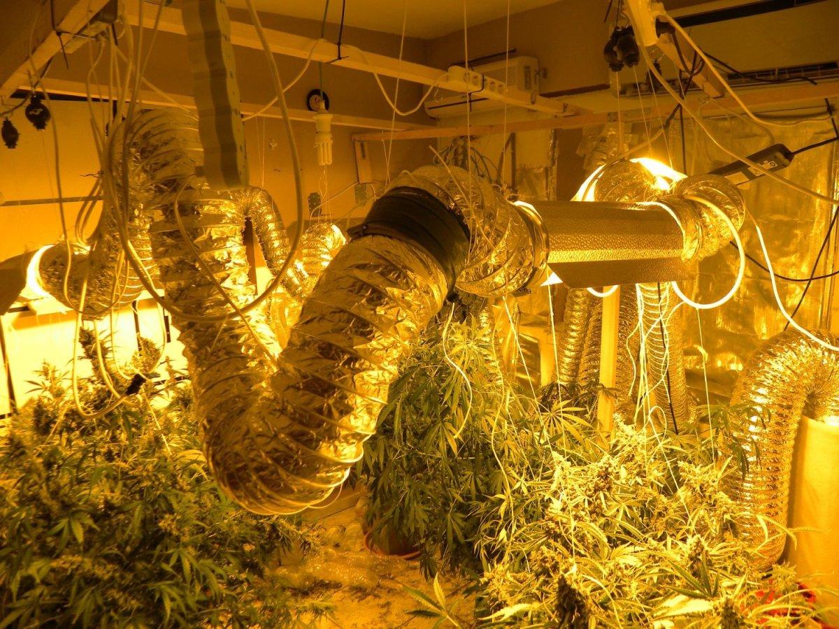 H ντουλάπα έκρυβε εργαστήριο καλλιέργειας κάνναβης!