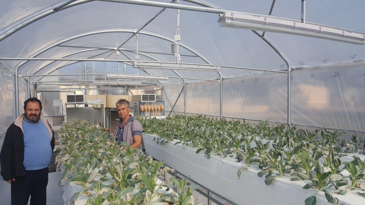 Φυσικό χάπι κατά του σακχάρου από λαχανικά που καλλιεργεί το ΤΕΙ Θεσσαλίας !