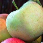 Ασφαλή τα τρόφιμα που διακινούνται στη χώρα μας, διαβεβαιώνει ο ΕΦΕΤ