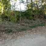 Κομμένα κλαδιά στη Λάρισα – Τι θα γίνει με την πρώτη βροχή; (ΦΩΤΟ)