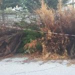 Λάρισα: Σωρός τα κομμένα κλαδιά στην οδό Καραϊσκάκη (φωτο)