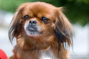 Έκκληση Λαρισαίων για σκυλάκι που χάθηκε