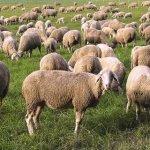Διευκρινήσεις για την έκδοση άδειας διατήρησης κτηνοτροφικών εγκαταστάσεων