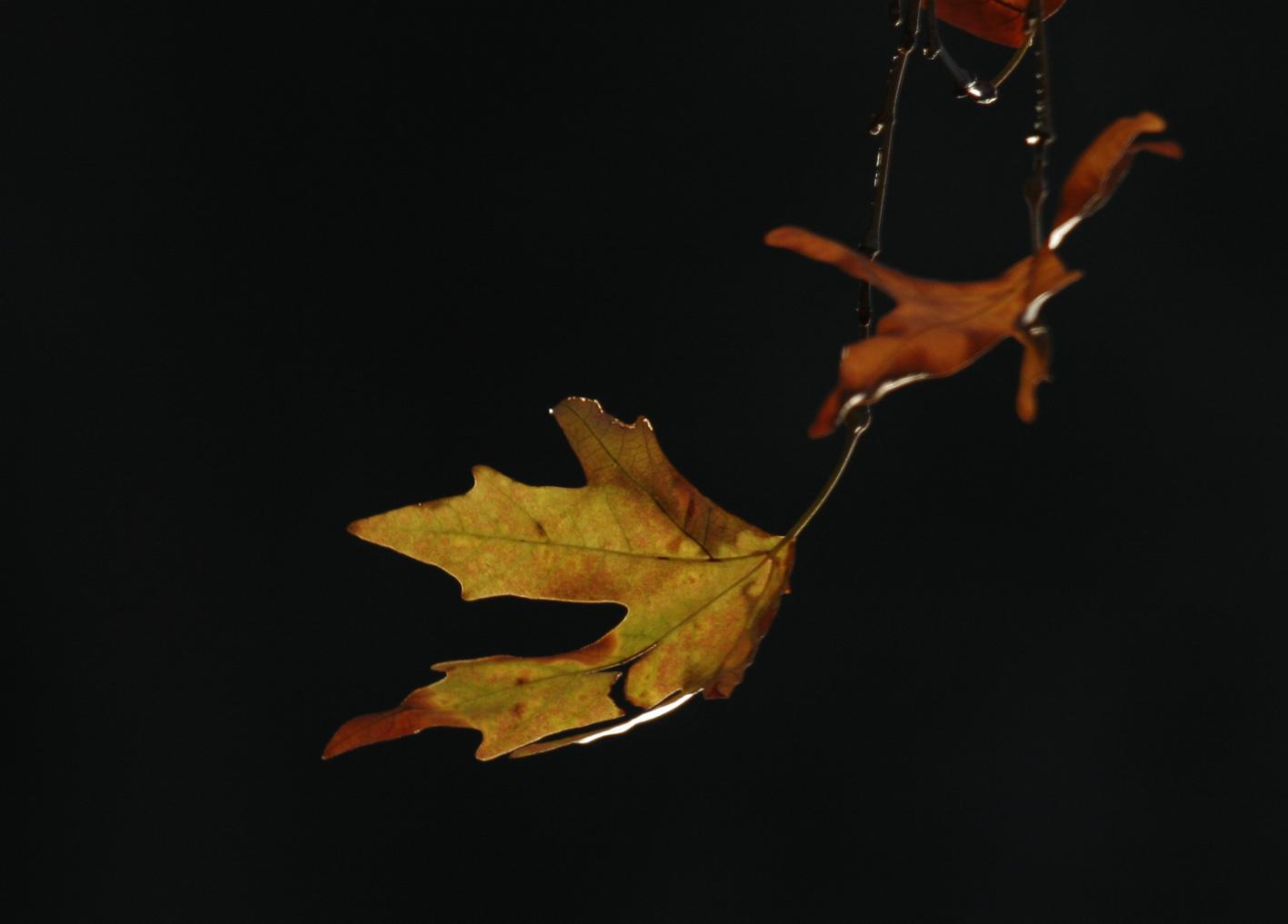 Φθινόπωρο 4