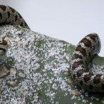 Φίδι εμφανίστηκε στην παραλία, μετά τη θεομηνία στη Νέα Πέραμο