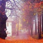 Απίστευτη, φθινοπωρινή, Ελάτη (φωτ.)