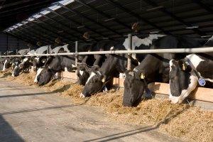 Άδειες διατήρησης κτηνοτροφικών εγκαταστάσεων