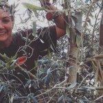 Γνωστή παρουσιάστρια ειδήσεων, στο δένδρο, μαζεύει ελιές