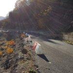 Καταρρέει δρόμος στο ν. Τρικάλων (φωτο)