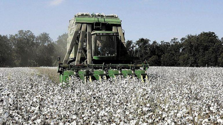 Νέα δεδομένα στις καλλιέργειες λόγω της κλιματικής αλλαγής