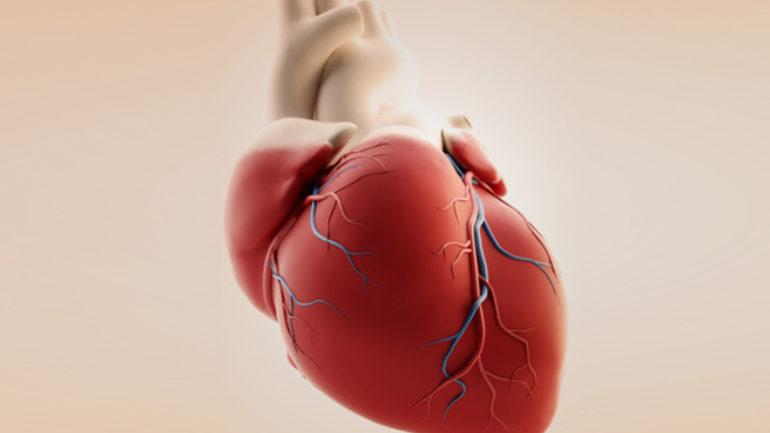 Kαρδιακός μυς από βλαστοκύτταρα