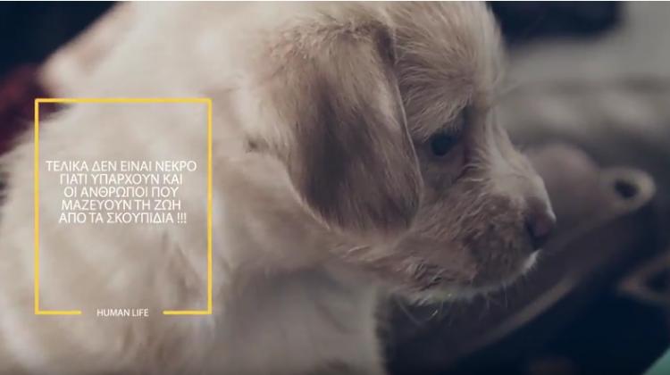Dogslife. Η συγκλονιστική ιστορία ενός αδέσποτου κουταβιού, στα Τρίκαλα
