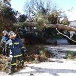 Παρεμβάσεις της Διεύθυνσης Πρασίνου σε πτώσεις δέντρων