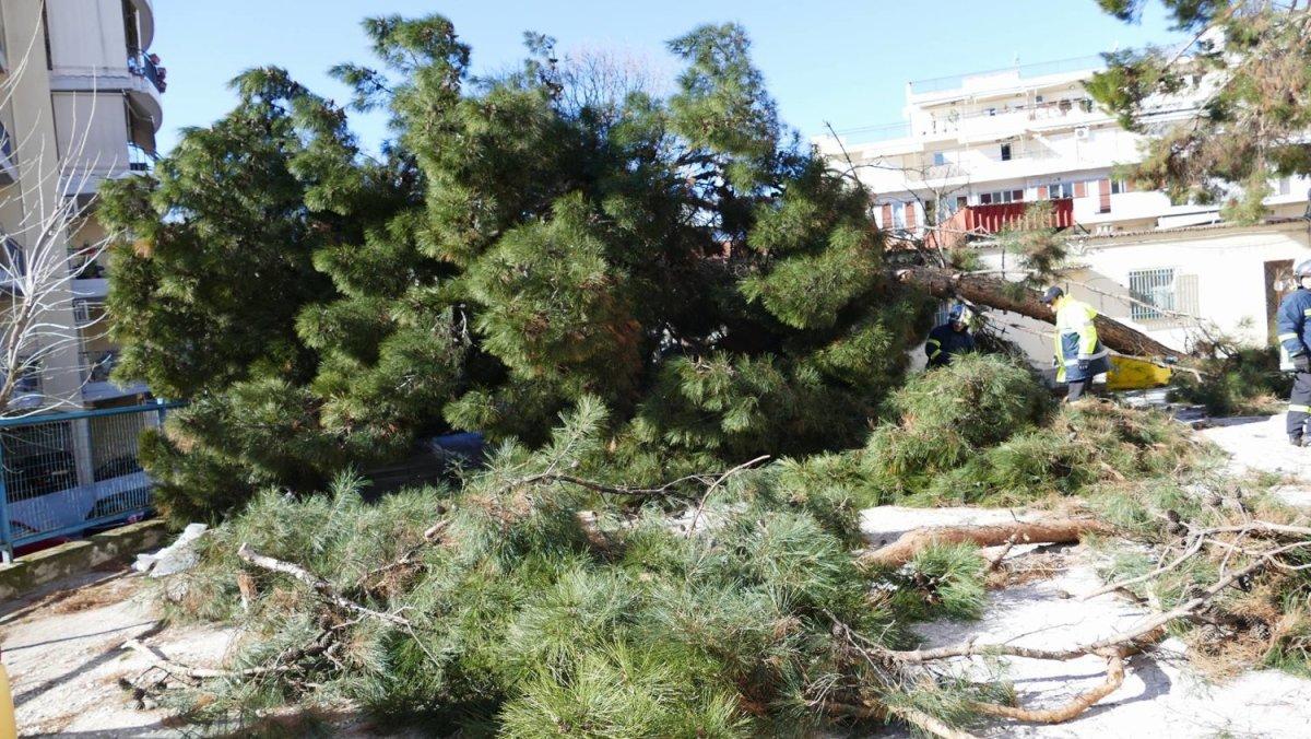 Δέντρο έπεσε στο προαύλιο του ΓΝΛ (φωτ. + βίντεο)