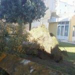 Λάρισα: Ξεριζώθηκε δέντρο από την αυλή παιδικού σταθμού (φωτ.)