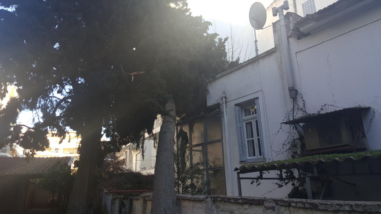 Δέντρο 2