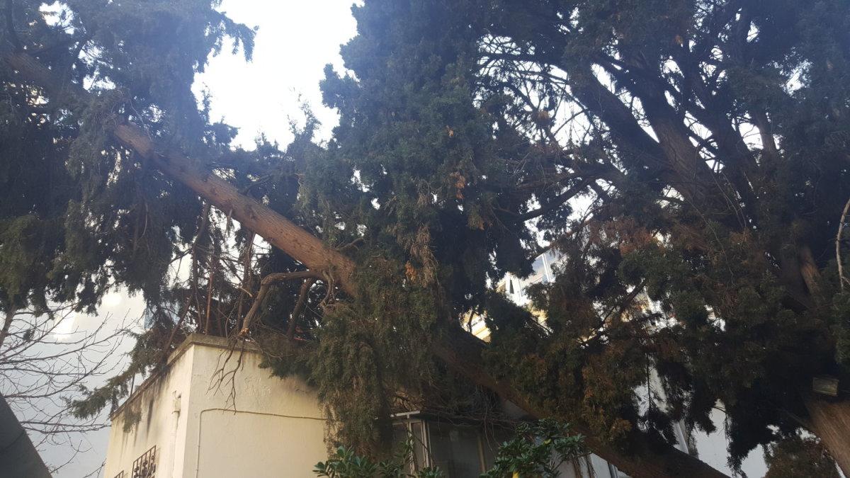 Δέντρο έπεσε σε στέγη σπιτιού στο κέντρο της Λάρισας
