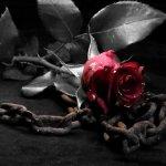 Κόλαφος… Κάθοδος στα κενά της μνήμης… Του Βαγγέλη Κουρτεσιώτη