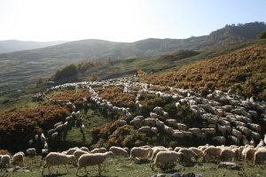 Ολιγοήμερη παράταση υποβολής των αιτήσεων στη πρόσκληση της βιολογικής κτηνοτροφίας