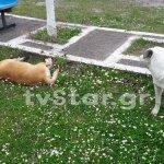 Ψάχνουν τον δολοφόνο των σκυλιών στο Μαρίνι