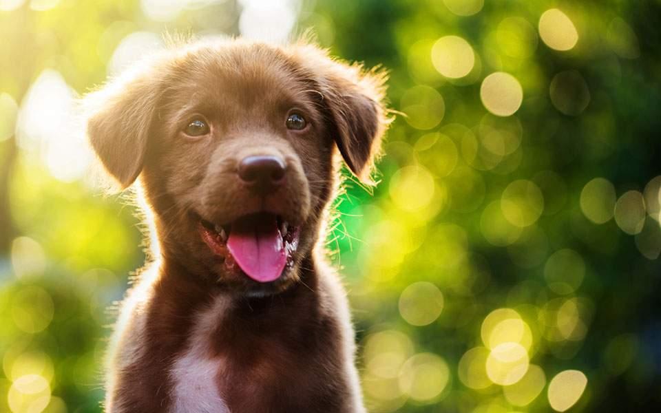 Αποσύρεται το νομοσχέδιο για τα δεσποζόμενα και αδέσποτα ζώα