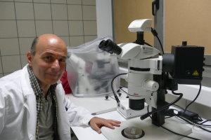 Επιστήμονες του Πανεπιστημίου Θεσσαλίας «παγιδεύουν» τον δάκο