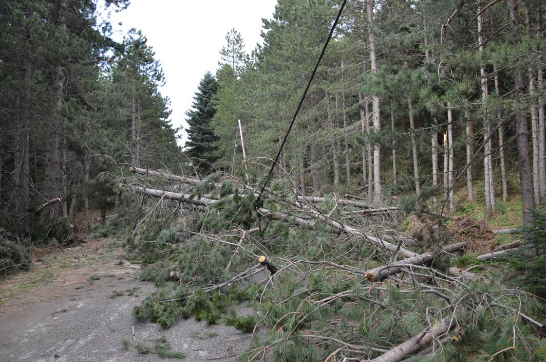 «Γεμάτος» πεσμένα δέντρα ο δρόμος Καλλιπεύκης – Καρυάς
