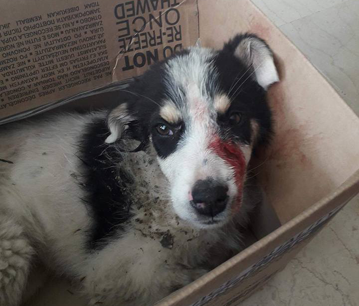 Συκούριο: Χτύπησε αδέσποτο σκύλο με σιδερένιο λοστό (φωτ.)