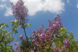 Αίθριος ο καιρός στη Θεσσαλία