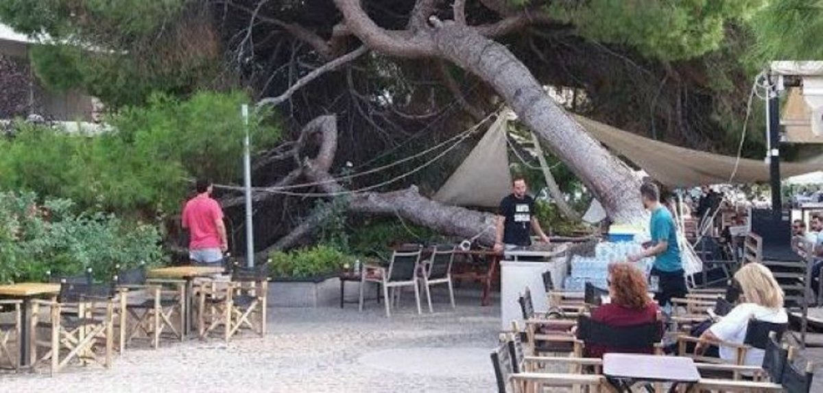 Δέντρο καταπλάκωσε καφετέρια (φωτ.)