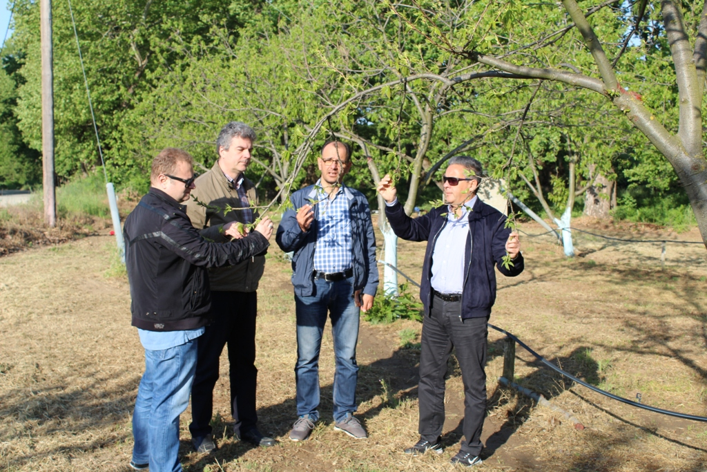 Έλεγχοι κλιμακίου της Περιφέρειας Θεσσαλίας για σφήκες σε καστανιές