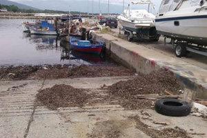 Στόμιο: Παραμένουν τα σημάδια από τις καταστροφές- Πετρέλαιο και ψόφια ψάρια (φωτ.)