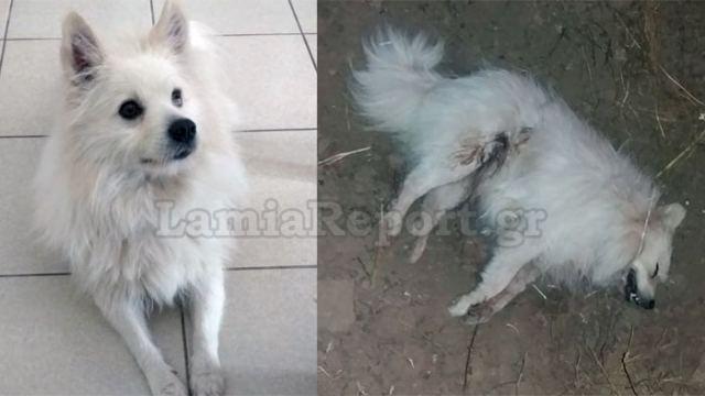 Τι άνθρωπος θα μπορούσε να σκοτώσει τέτοιο σκυλάκι;