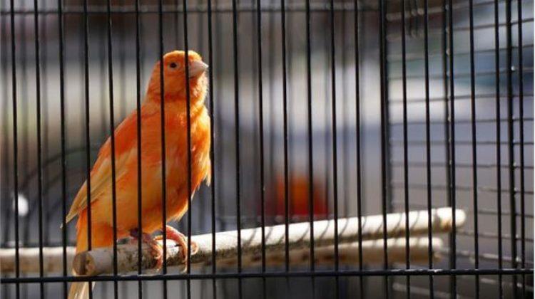 Τρίκαλα: Σπείρα κλέβει κλουβιά με πουλιά