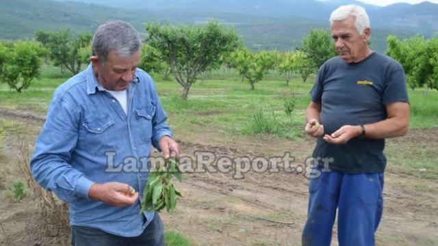 Λαμία: Επιδρομές στα χωράφια της Δαμάστας