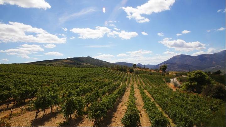 Η Ελλάδα γίνεται το κέντρο γαστρονομίας και οίνου της Ευρώπης