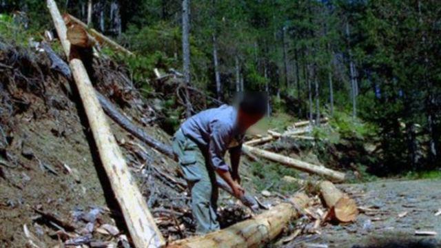Φθιώτιδα: Τον έριξε στο γκρεμό το δέντρο που έκοβε