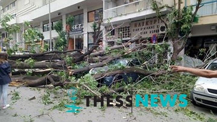 Δέντρο έπεσε στη μέση του δρόμου