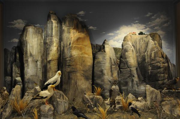 Bράβευση για το Μουσείο Φυσικής Ιστορίας Μετεώρων και Μουσείο Μανιταριών