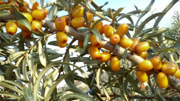Η προσπάθεια ενός νέου αγρότη στην καλλιέργεια πολυδύναμων φυτών