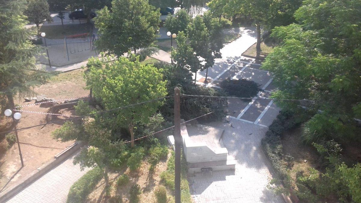Δέντρο έπεσε σε πλατεία της Λάρισας (φωτ.)