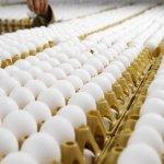 Oφέλη του αυγού στην υγεία