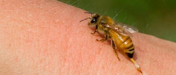 Πέθανε εν ώρα εργασίας από τσίμπημα σφήκας