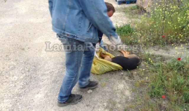 Φθιώτιδα: Δήμαρχος διώκεται γιατί φέρεται να έριξε φόλες σε αδέσποτα