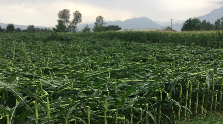 Ανεμοθύελλα και χαλάζι σάρωσαν καλλιέργειες στα Τρίκαλα (video-φωτ.)